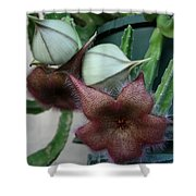 Potted Starfish Shower Curtain