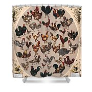 Poultry Of The World Poster Shower Curtain