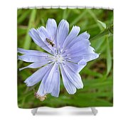 Powder Blue Chicory Shower Curtain