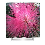 Powder Puff Tree Shower Curtain