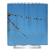 Power Line Birds Shower Curtain