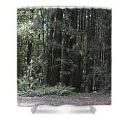 pr 137 - Big Trees Shower Curtain