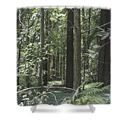 pr 138 - Frolicking Trees Shower Curtain