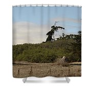 pr 180 - The Leaning Tree Shower Curtain