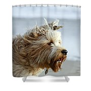pr 210 - The Shaggy Dog Shower Curtain
