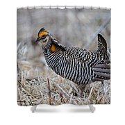Prairie Chicken Ll Shower Curtain