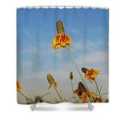 Prairie Cone Flowers Against Blue Sky Horizontal Number Three Shower Curtain