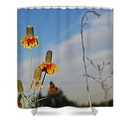 Prairie Cone Flowers Against Blue Sky Vertical Number Two Shower Curtain