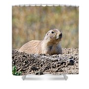 Prairie Dog  9255 Shower Curtain