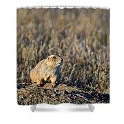 Prairie Dog Alert Shower Curtain