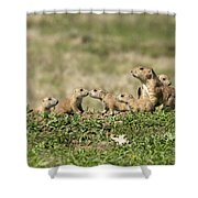 Prairie Dog Family 7270 Shower Curtain