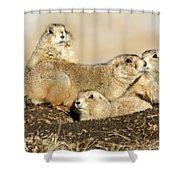 Prairie Dog Family Portrait Shower Curtain