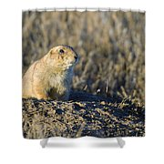 Prairie Dog Watchful Eye Shower Curtain