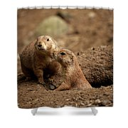 Prairie Dogs Shower Curtain