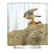 Prairie Falcon Shower Curtain