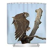 Prairie Falcon Stretching Shower Curtain