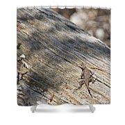 Prairie Lizard _ 1a Shower Curtain