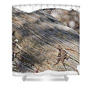 Prairie Lizard _ 1b Shower Curtain