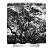 Prairie Oak Shower Curtain
