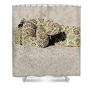 Prairie Rattlesnake  Shower Curtain