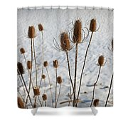 Prairie Seedheads Shower Curtain