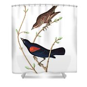 Prairie Starling Shower Curtain