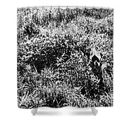 Prairie Sun Shower Curtain