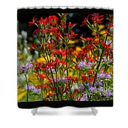 Prairie Wildflowers 2 Shower Curtain