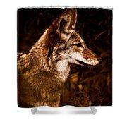 Prairie Wolf Portrait Shower Curtain