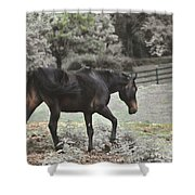 Prancing  Shower Curtain