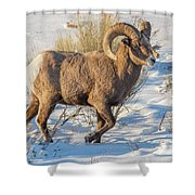 Prancing Ram In Snow Shower Curtain