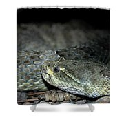 Prarie Rattle Snake Shower Curtain