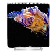 Prawn Larva Shower Curtain