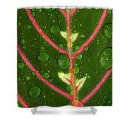 Prayer Plant Vertical Shower Curtain