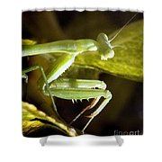 Praying For Prey Shower Curtain