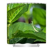 Praying Mantis-2 Shower Curtain