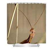 Praying Mantis Shower Curtain