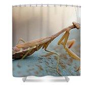 Praying Mantis Close Up Shower Curtain