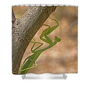 Praying Mantis On The Hunt Shower Curtain