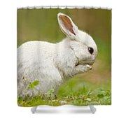 Praying White Rabbit Shower Curtain
