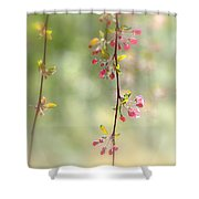 Pre Blossoms Shower Curtain