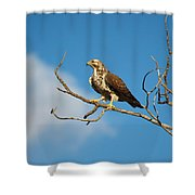 Pre-take Off Pose Shower Curtain