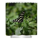 Precious Black And White Zebra Butterfly In The Spring Shower Curtain