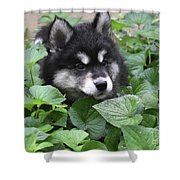 Precious Fluffy Alusky Puppy Dog In Green Foliage Shower Curtain