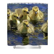 Precious Goslings Shower Curtain