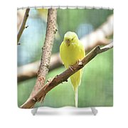 Precious Little Yellow Parakeet In The Wild Shower Curtain