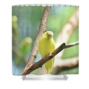 Precious Yellow Budgie Parakeeet In The Wild Shower Curtain