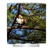 Preening Bald Eagle Shower Curtain