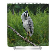 Preening Shower Curtain