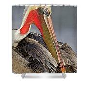 Preening Pelican Shower Curtain